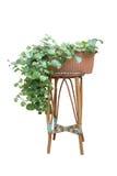 Kalanchoe växt Fotografering för Bildbyråer