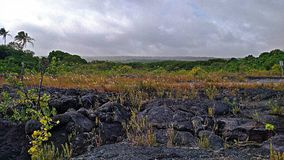 Kalapana Lava Flow Land. The land of Kalapana, where the lava flow births new earth surface. Capturedon August 13, 2017 in Kalapana, Hawaii by me Royalty Free Stock Photo