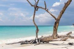 Kalapattar strand på den Havelock ön Arkivbilder