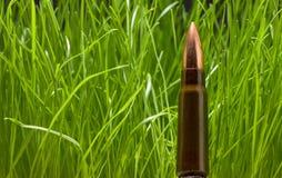 Kalashnikov cartridge over grass background Royalty Free Stock Image