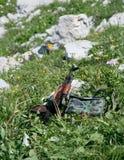 Kalashnikov on grass Royalty Free Stock Photography