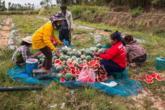 KALASIN, THAILAND - 16. DEZEMBER: Landwirterntewassermelone herein Stockfoto