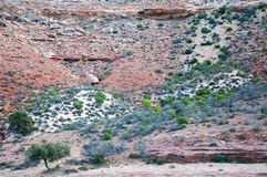 Kalbarri Riverbank in Western Australia royalty free stock images