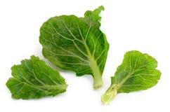 Kale świeży warzywo odizolowywa na białym tle Fotografia Stock
