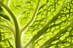 kale минимальный Стоковая Фотография RF