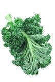 Kale. Fresh green kale on white background royalty free stock photography