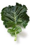 Kale Стоковые Изображения