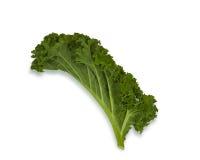 Kale. Single Kale leaf isolated on white Stock Images