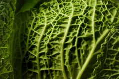 Kale Royalty Free Stock Images