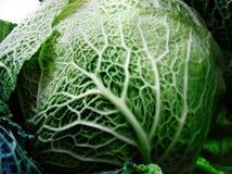 Kale Foto de Stock Royalty Free