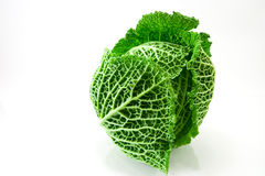 Kale Stock Photography