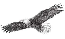Kale adelaar die zwart-wit vector vliegen royalty-vrije illustratie
