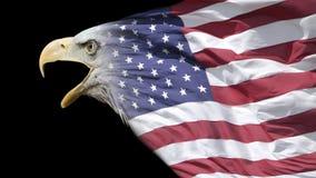 Kale adelaar en vlag Royalty-vrije Stock Foto