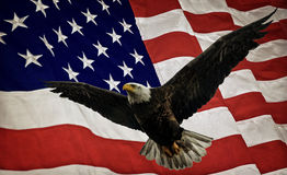 Kale adelaar en vlag Stock Fotografie