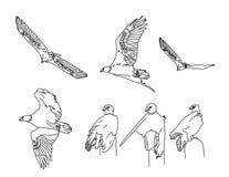Kale Adelaars stock illustratie