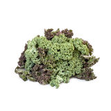 Kale cabbage isolated. On white background Royalty Free Stock Photos