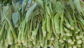 Kale chinês Foto de Stock