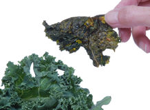 Kale Chip near fresh kale Royalty Free Stock Image