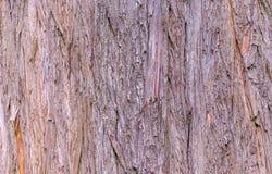 Kale ciprestextuur Stock Afbeeldingen