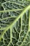 Kale closeup 1 Stock Photography