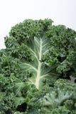 Kale curly fresco Fotos de Stock Royalty Free