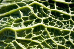 Kale em mínimo imagem de stock