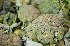 Kale fresco fotos de stock