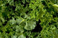 Kale Greens stock photo