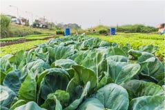 Kale Stock Image