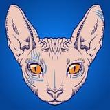 Kale het gezichtsgrafiek van de sfinxkat, overzicht Royalty-vrije Stock Afbeelding