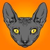 Kale het gezichtsgrafiek van de sfinxkat, overzicht Royalty-vrije Stock Foto's
