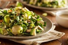 Kale i Brussel - kiełkowa sałatka Fotografia Royalty Free