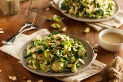 Kale i Brussel - kiełkowa sałatka Zdjęcia Stock