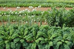 Kale i cebule Zdjęcie Royalty Free