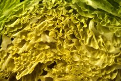 Kale/Kail. Close-up detail cut on half Royalty Free Stock Photo
