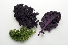 Kale leaf Royalty Free Stock Photography