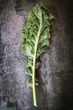 Kale Leaf on Slate Overhead View. Kale leaf, overhead view on dark slate Stock Image