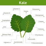 Kale odżywka fact i świadczenia zdrowotne, ewidencyjna grafika ilustracji
