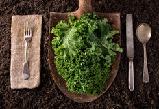 Kale. Organic farm to table healthy eating concept on soil background Stock Image