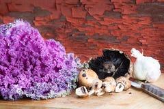Kale, pieczarki i czosnek w nieociosanej kuchni, Obrazy Royalty Free