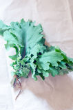 Kale. Red Russian kale variety in the kitchen table royalty free stock photos