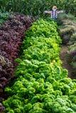 Kale Royalty Free Stock Photo
