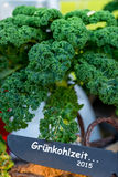 Kale time 2015 stock images