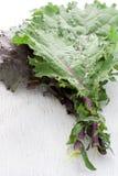 Kale vermelho Fotos de Stock Royalty Free