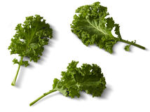 Kale. On a white background royalty free stock photo