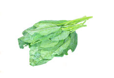 Kale on white background Royalty Free Stock Images