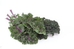 Kale in a white background Stock Images