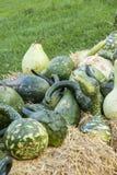 Kalebassenkürbirs cucurbita pumpkin pumpkins from autumn harves Stock Image