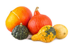 Kalebasser för färgrik blandad squash för pumpor dekorativa olika arkivfoto