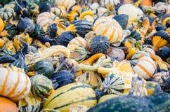 Kalebasser och pumpor Royaltyfria Bilder